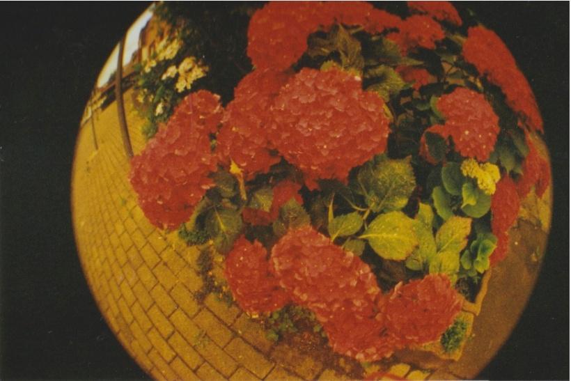 Christin feldmann fishey flower