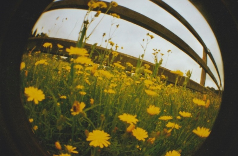 Christin Feldmann_yellow