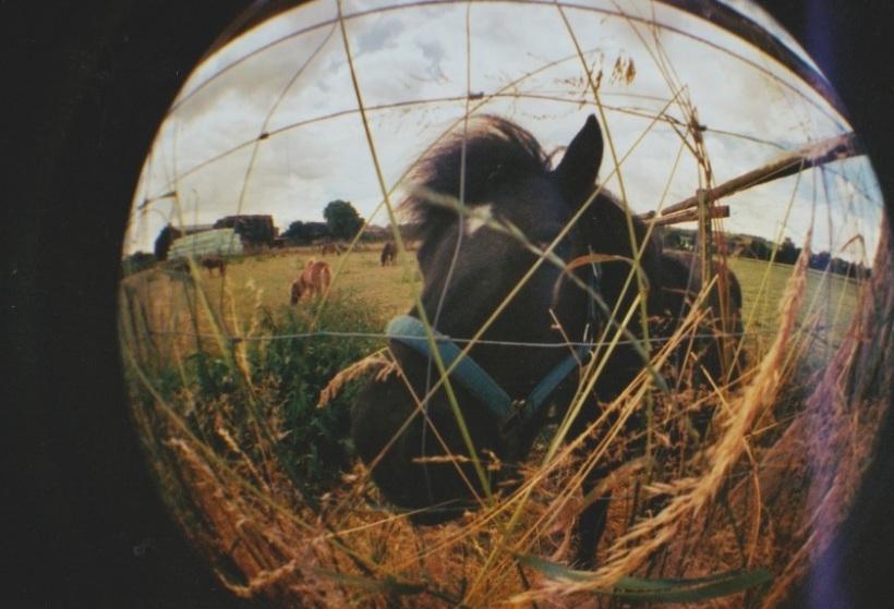 Christin Feldmann_Horses of the sun